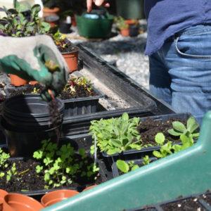 Students working in Dalkey Garden School,Dalkey, Co. Dublin