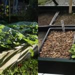 Dalkey-Garden-School-Gardening