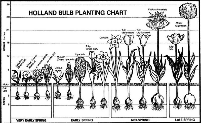 Chart Bulb Depth