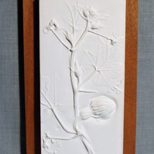 Ornamental Gourd Botanical Plaster Cast
