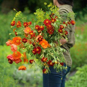 Fionnuala Fallon Cut Flower Gardener