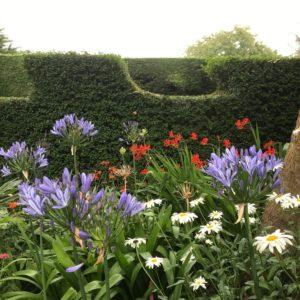Garden August 2019