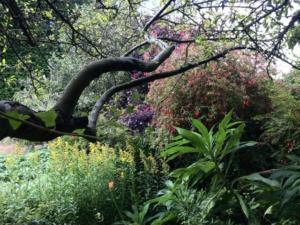 Mornington garden September 2020